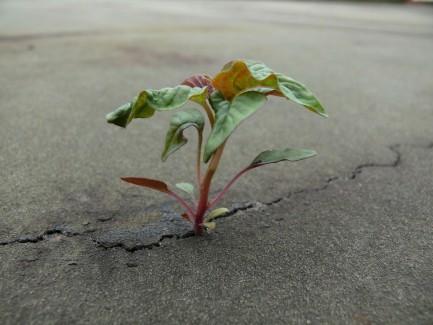 plant in concrete