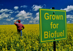 biofuel-sign