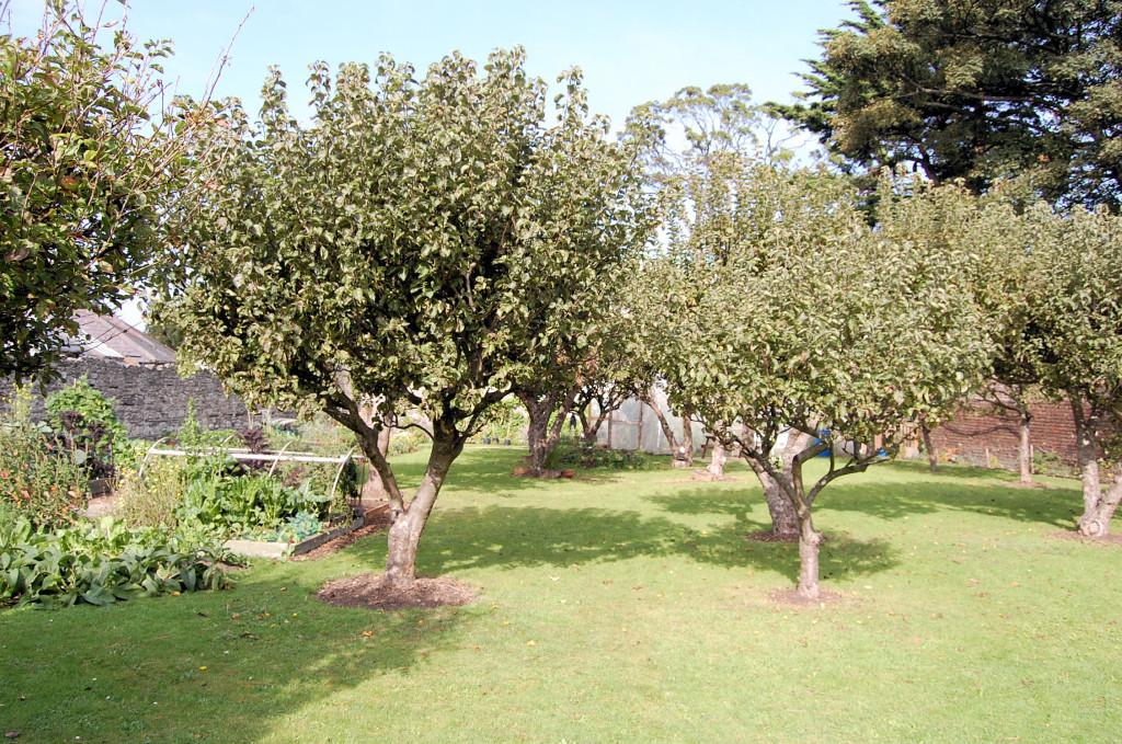 Heritage Garden sept 13 013