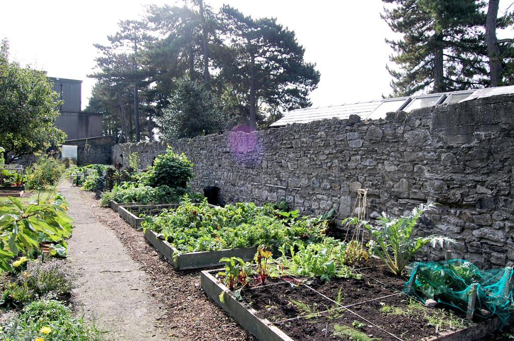 Heritage Garden sept 13 020