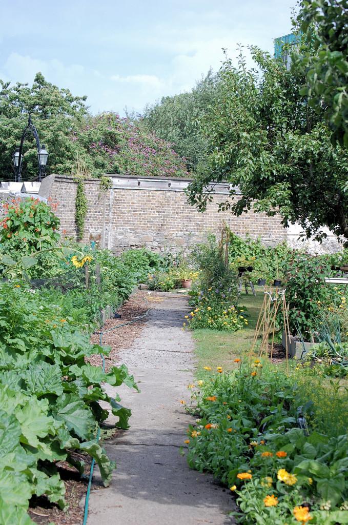 sq meter garden2 015