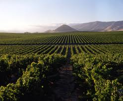vineyards of the Lord
