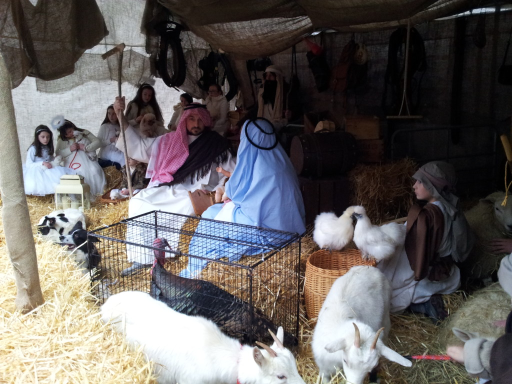 Live Crib at St Mel's Cathedral Longford