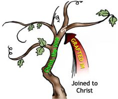 grafted by christ
