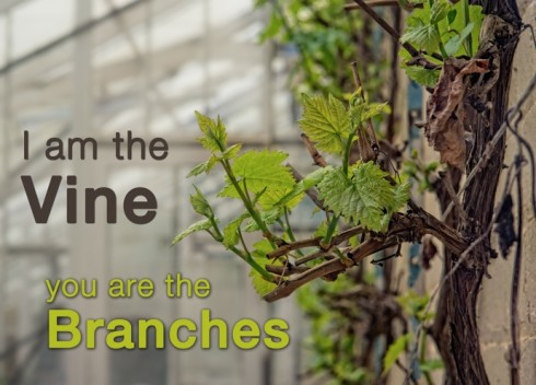 i-am-the-vine-you-are-the-branches1