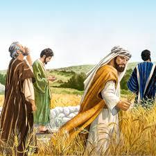 picking-corn-on-the-sabbath